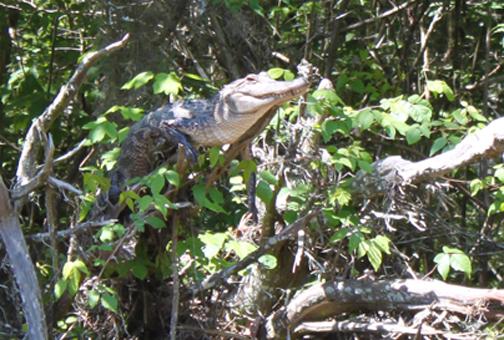 climbing-crocs