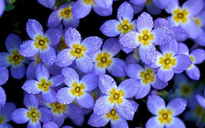 wildflower_featured.