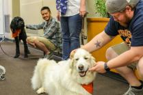 HABIT animals at the Veterans Resource Center provide company during Graduate & Professional Student Appreciation Week...Monday, April 02, 2018...Photos by Andi Pomeroy...41211