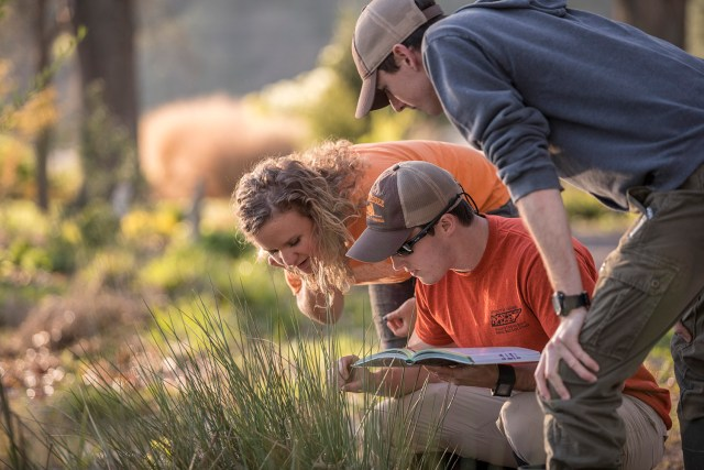 Students working on the UT Gardens...Photo by Jack Parker