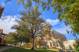 A persimmon tree in front of Henson Hall on November 15, 2019. This is a Tennessee State Champion. The scientific name of the tree is Diosporos virginiana and it is 42 inches in diameter and 70 feet tall. Photo by Steven Bridges/University of Tennessee
