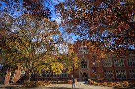In front of Ferris Hall stands a trident maple, left, and a swamp chestnut oak, right, on November 15, 2019. Photo by Steven Bridges/University of Tennessee