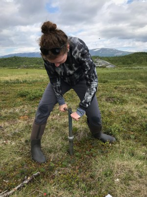 Elizabeth Herndon collects a soil core that will be analyzed for chemical and biological properties, including phosphorus concentration and its chemical form (for example, bound to soil minerals or contained in organic matter).