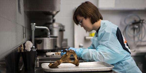 FAC student cleaning bones