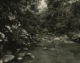 """Mountain Laurel,"" an image from the Thompson Brothers Digital Photograph Collection"