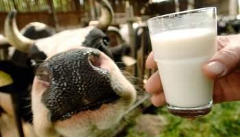 молоко - марксовский район