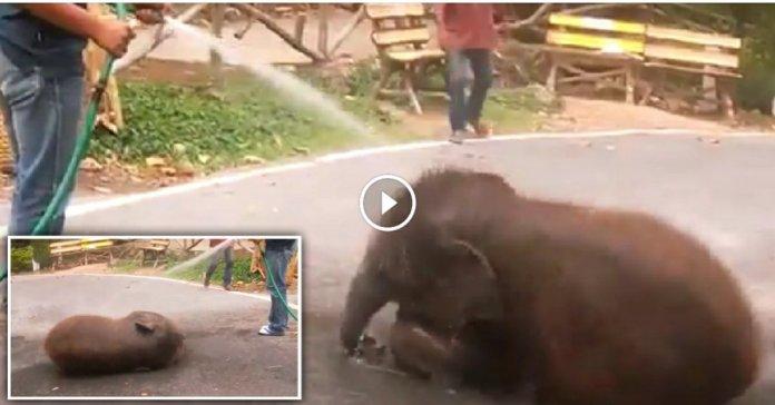 Baby Elephant bathing video goes viral on internet