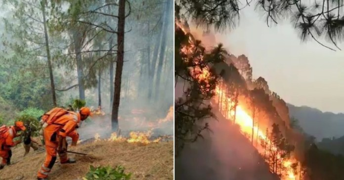 Uttarakhand Forest Fire : 46 Wildfires in state till date