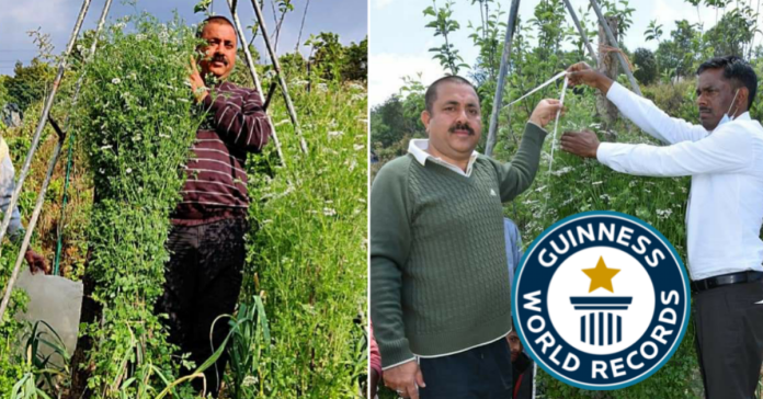 Tallest Coriander Plant : Uttarakhand Farmer Grows the Highest Plant of Coriander