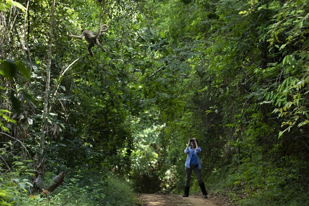 Anthropology professor Karen Strier recognized as prominent primate conservationist in Brazil