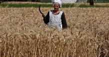egypt tonnes wheat