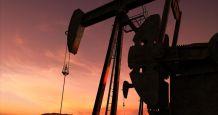 oil catch market sector
