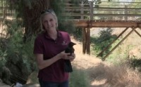 Pamela Turner helped care for this crow after it was injured and now releases it back into the wild.