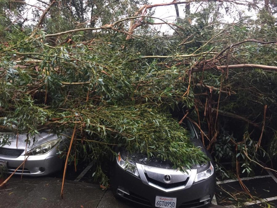 Eucalyptus topples outside la finestra restaurant in lafayette sunday news24 - La finestra lafayette ...