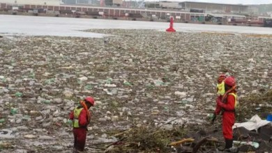 Photo of Marine life in jeopardy as sewage pours into Durban harbour