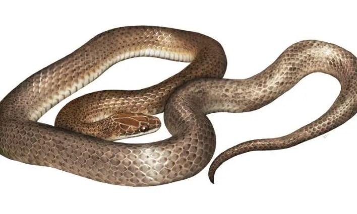 Snake Swallowed Money