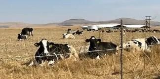 Estina dairy farm