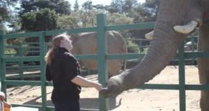 Joburg Zoo elephants