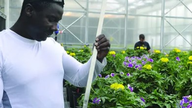 Photo of Greenhouse Horticulturist wanted immediately: Salary R30 000 to R35 000 Per Month