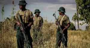 Zimbabwean game rangers