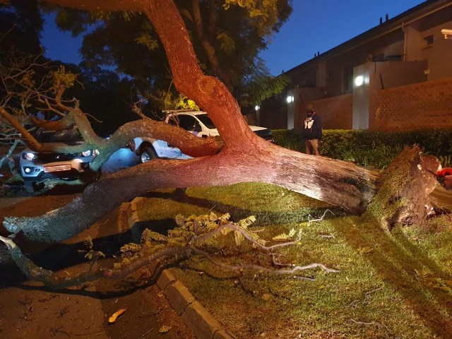 Woman injured after tree falls on car
