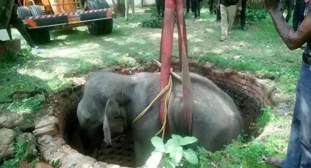 Elephant rescued after falling