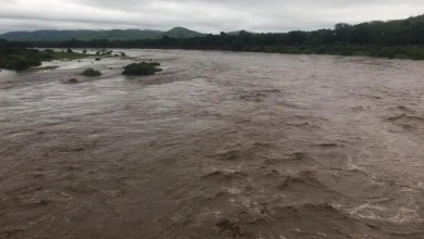 Kruger Park on high alert as heavy rains trigger flooding and road closures