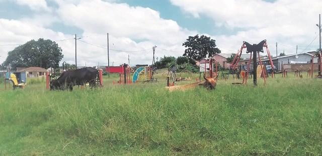 Pietermaritzburg cows hit the gym