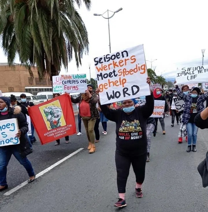 Western Cape farmworkers air grievances with labour minister over UIF access