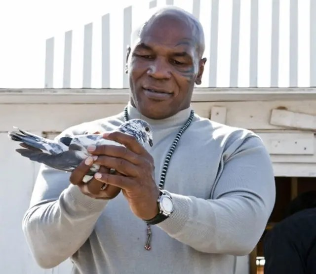 This is why you should never mess with Mike Tyson