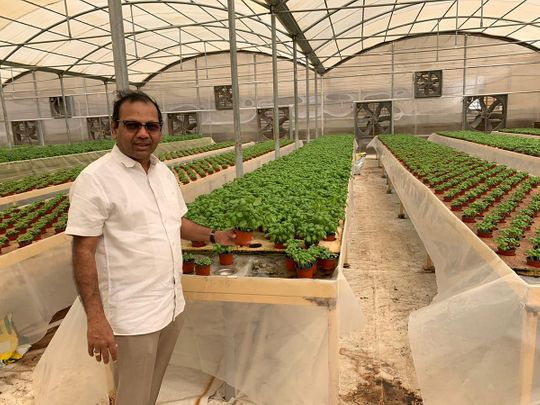 COVID-19 brings out the farmer in Indian expat realtor in the UAE
