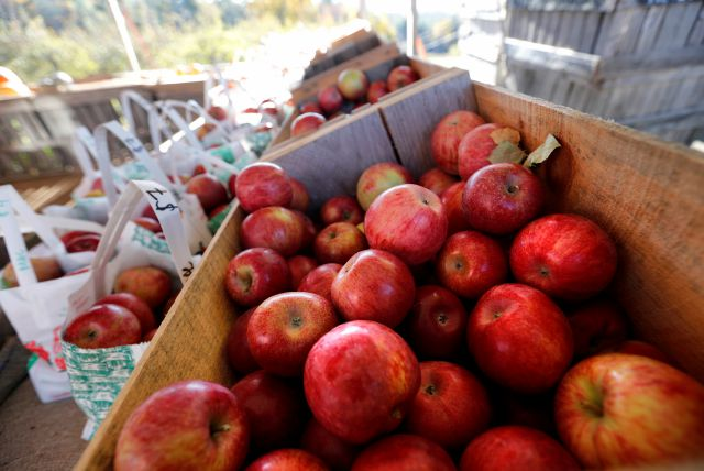 Cheshire is still known for its apple orchards
