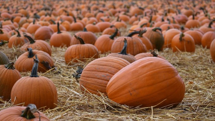 Fall Fun: Pumpkin Patches, Apple Picking, Corn Mazes and More