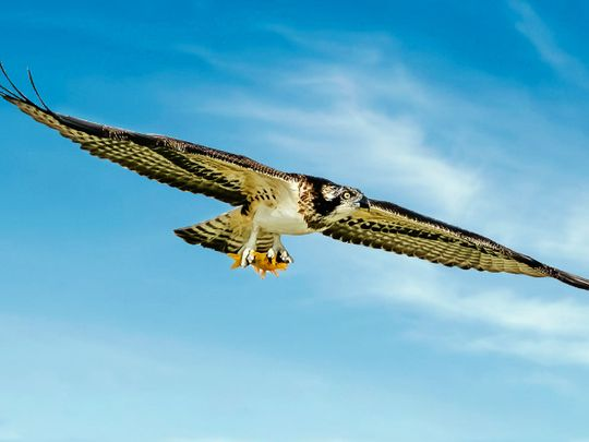 Photos: Gulf News readers share pictures of beautiful birds and animals in the UAE and India