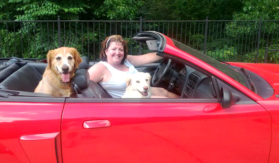Fords for Fido