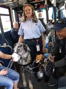 Dog training on the OCTA buses