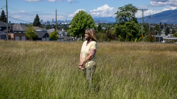 Overgrown grass in East Vancouver park meant to attract bees is attracting complaints too   CBC News