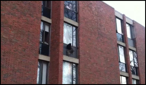 Turkey flys Into Window