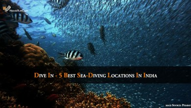 Photo of Dive In – 5 Best Sea-Diving Locations In India