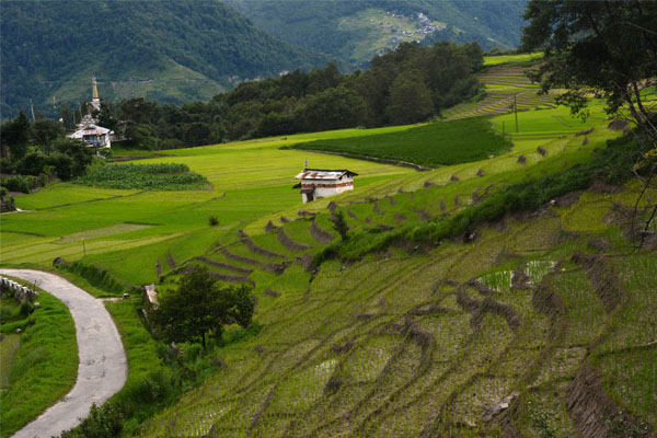 Ziro Valley in AP Underrated