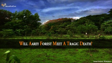 Will Aarey Forest Meet A Tragic Death?