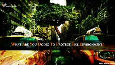 Photo of What Are You Doing To Protect The Environment?