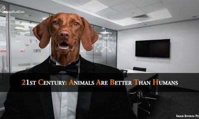 21st Century: Animals Are Better Than Humans