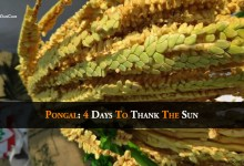 Photo of Pongal: 4 Days To Thank The Sun