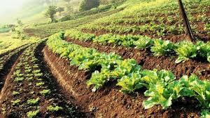 Growth of Organic Farming in India