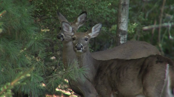 Wisconsin's holiday deer hunt to be held in 17 counties