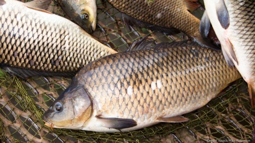 Worries Over Racism, Waterways Inspire Push to Rename Fish