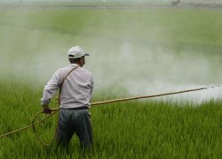 TechAccel Invests in Sprayable RNAi Pesticide Technology