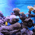 MOAI is an Internet of Things robot that keeps aquariums connected and clean while allowing users to capture and share 24/7 live streaming views with its built-in camera.