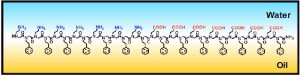 Peptoid polymers adsorbed to the oil-water interface are highly ordered thanks to interactions between neighboring molecules.